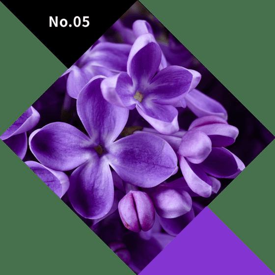 No.05